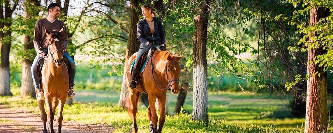 activitats/horse/horse1.jpg