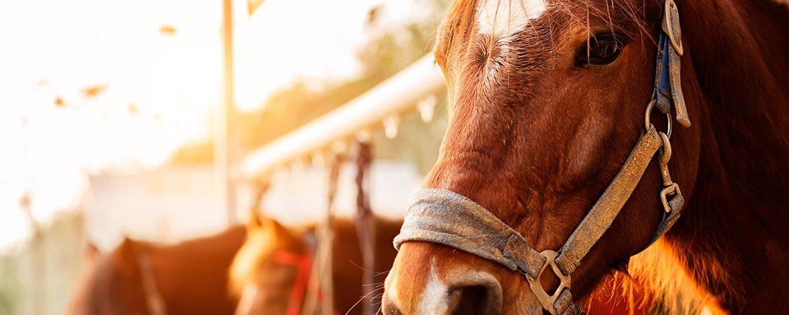 activitats/horse/horse2.jpg